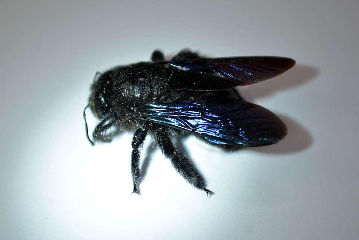 Интересные картинки пчелок это
