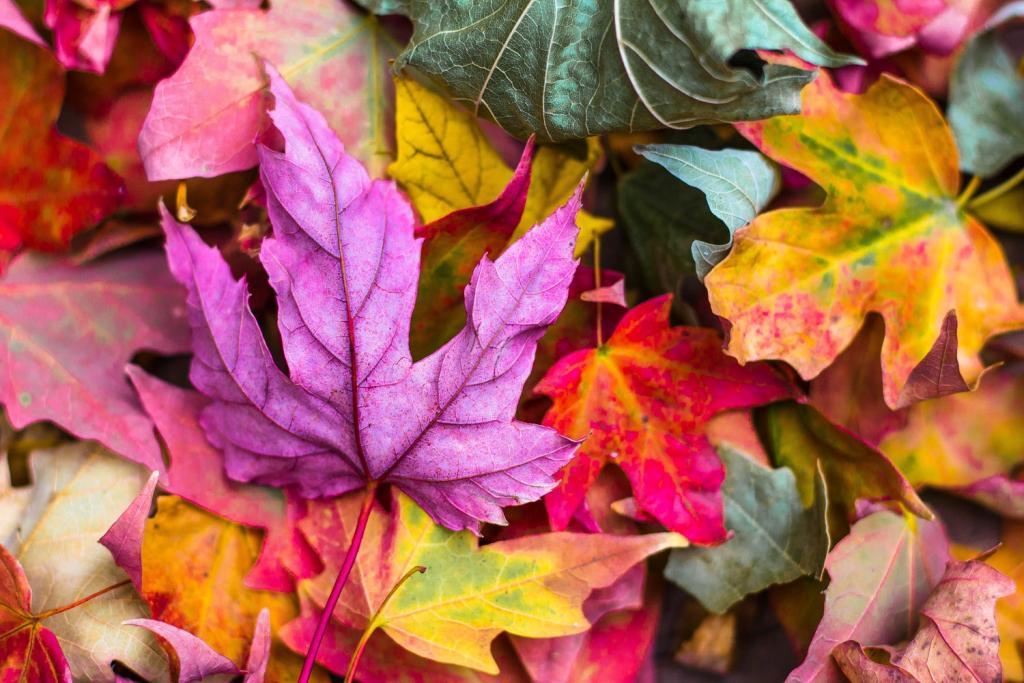 Осенний пленэр под открытым небом