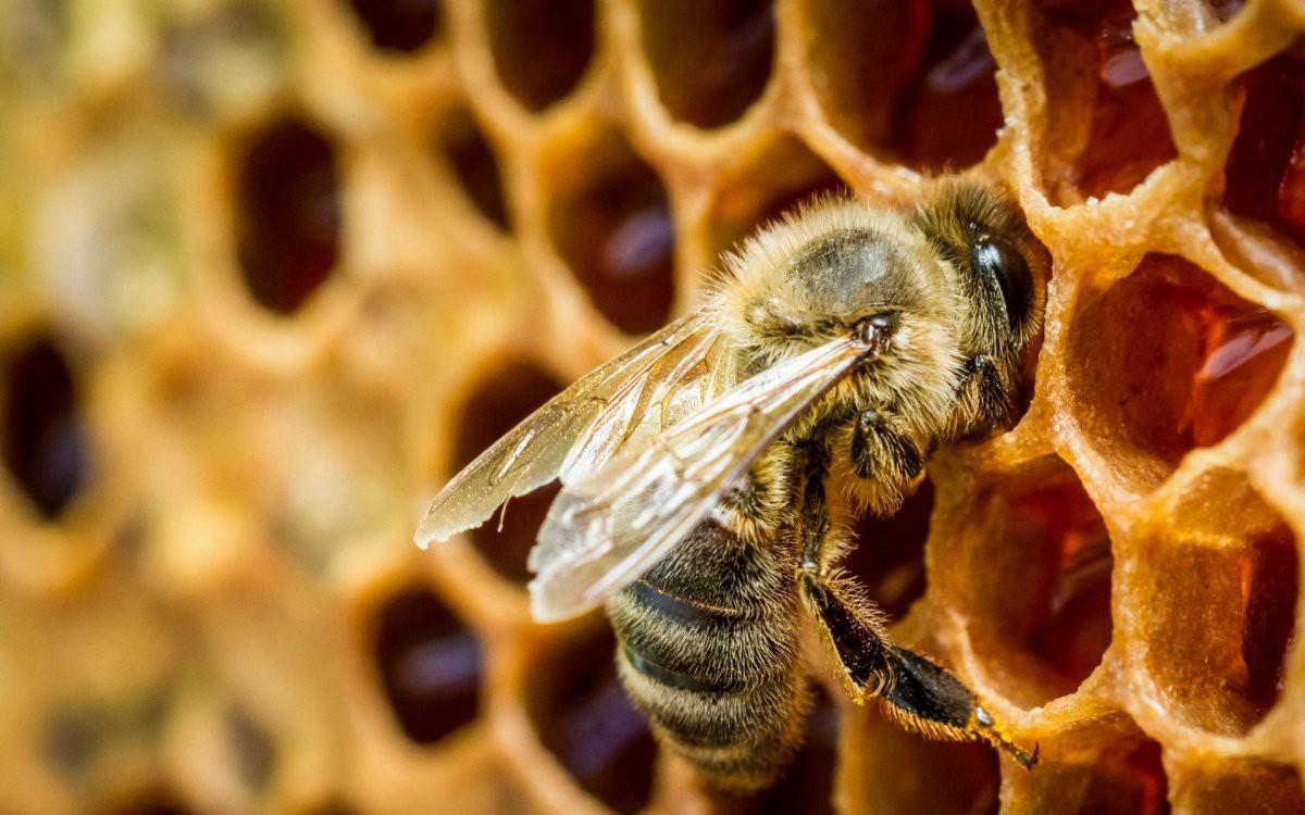 Будут созданы пчеловодческие хозяйства
