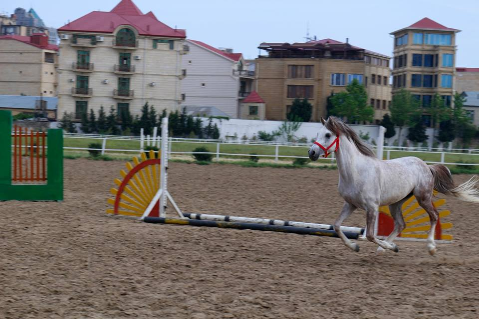 """""""Baku Golden Horse Therapeutic and Educational Center"""""""