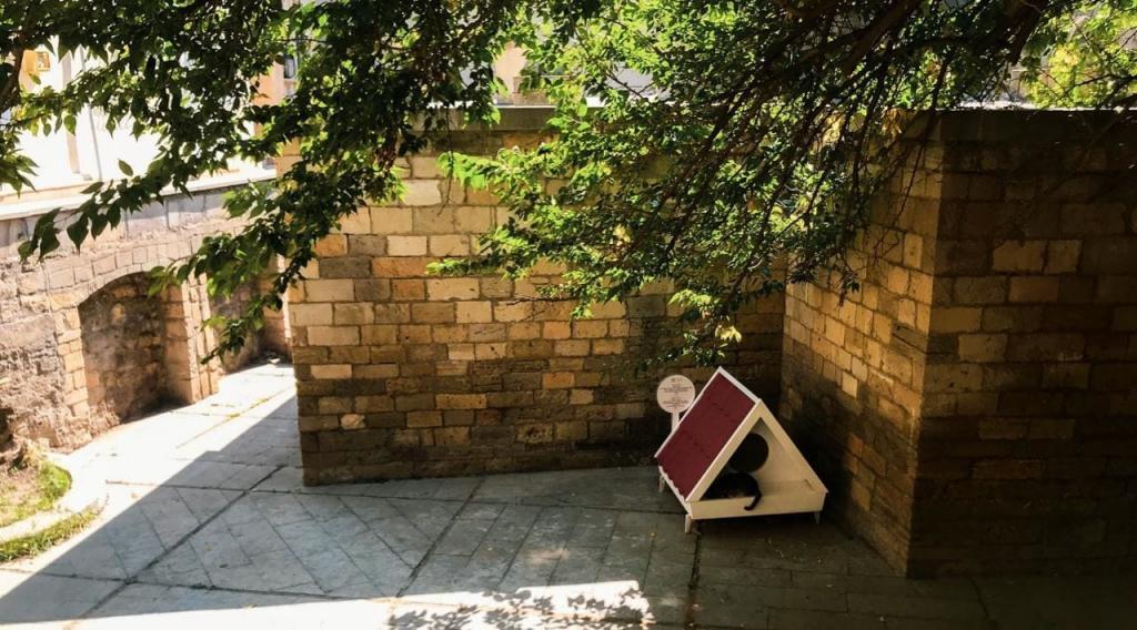 В Ичери шехер появился домик для бездомных кошек