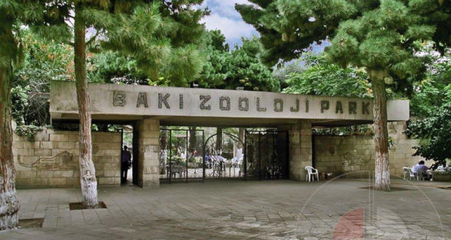 Бакинский зоопарк приостанавливает свою работу на несколько месяцев