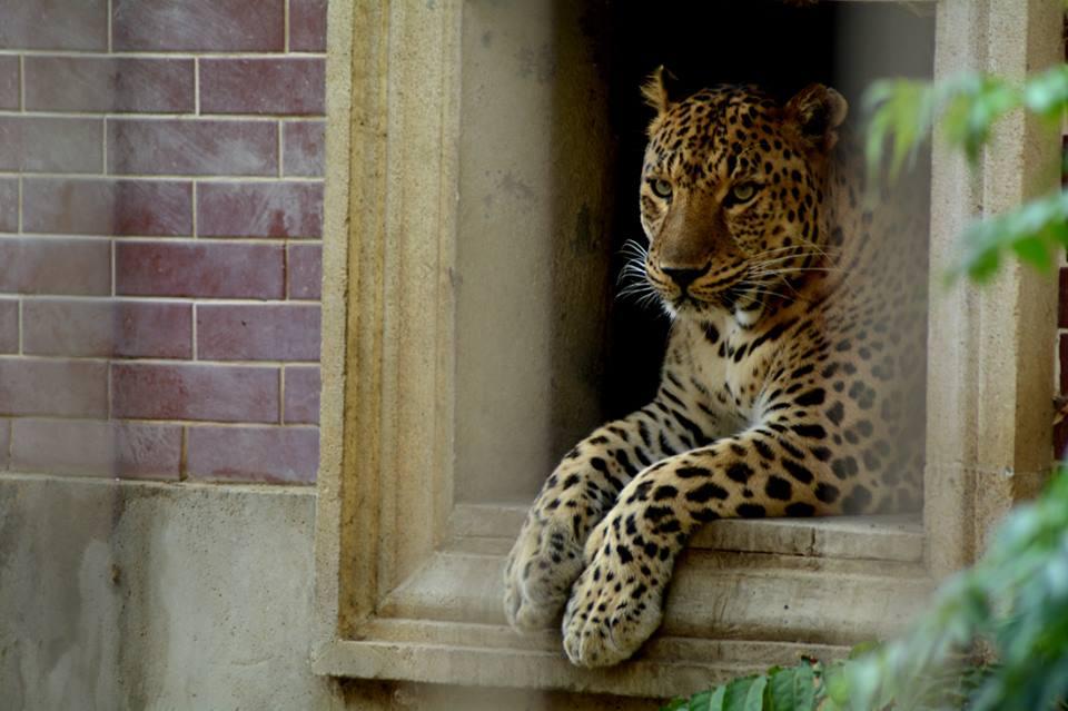 Бакинский зоопарк временно закрывается и расширяется в два раза
